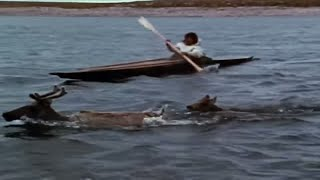 Download Tuktu- 10- The Caribou Hunt (Inuit traditional hunting techniques) Video