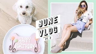 Download My Baby's 1st Birthday + Daily Life in LA | June Vlog #2 Video