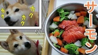 Download 柴犬小春 震える旨さであごがカクカク!秋サーモンの刺身は無敵!ASMR、音フェチ、飯テロSalmon sashimi Video