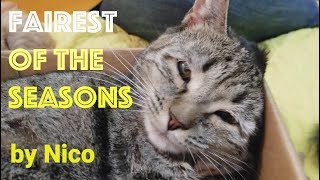 Download Covered With Kittens ″Fairest of the Seasons″ by Nico Video
