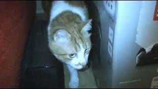 Download 怖い!猫が何かに怯えて隠れる 不可思議な行動 新居でも何かがいるのか・・ Video