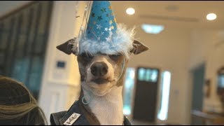 Download kermit's 8th birthday Video