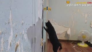 Download 고양이 숲 탈출 대작전 - 방문 여는 고양이 Video