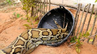 Download Awesome Big Snake Trap Using Cage Trap - How To Make Big Python Snake Trap Work 100% Video