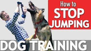 Download Does your Dog Jump on Everyone? Here's what to Do! Video