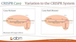 Download CRISPR Cas9 - A Brief Introduction Video