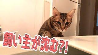 Download 突然飼い主が風呂の中に沈んだ時の猫たちはどんな反応をするのか!! Video
