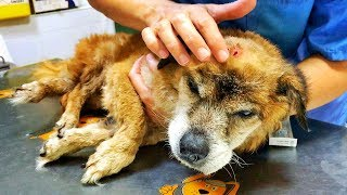 Download Amazing old dog hit with a hammer, and thrown to the trash ! Video