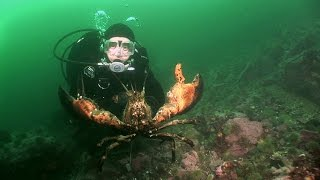 Download Northern Lobsters of Maine | JONATHAN BIRD'S BLUE WORLD Video