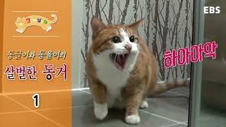 Download 고양이를 부탁해 - 동글이와 동율이의 살벌한 동거 #001 Video