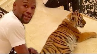 Download Floyd Mayweather ″Gets Dragged Around By $2M Tiger In Moscow″ Video