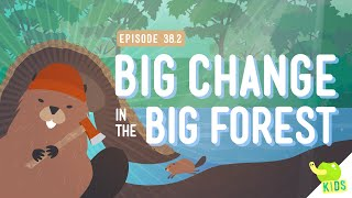 Download Big Changes in the Big Forest: Crash Course Kids #38.2 Video