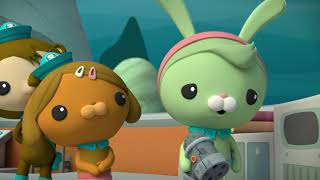 Download Baby Sea Turtles / Octopod Mystery Video