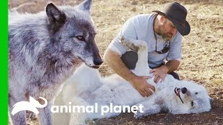 Download LARC's Best Rescue Success Stories | Wolves and Warriors Video