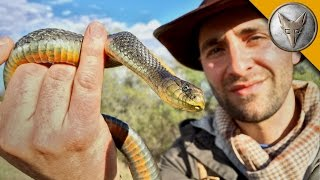 Download Slithery Snakes of the California Grasslands Video