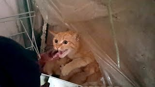 Download 새끼 낳은 어미 고양이는 건들지 맙시다. Video