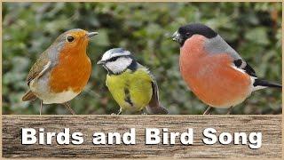 Download Birds : Bird Sounds and Bird Sounds : Vogelklänge 鳥、鳥の音 Video