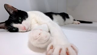 Download 猫が飼い主をほったらかしてお出迎えに来なかった理由 - How is the welcomeow today? - Video