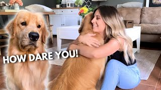 Download Hugging Another Dog Too Long | Jealous Dog Reaction Video