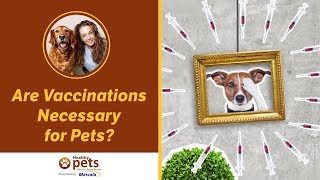 Download Dr. Becker: Are Vaccinations Necessary for Pets? Video