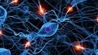 Download Anatomy and Physiology of Nervous System Part I Neurons Video