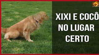 Download Ensine a fazer Xixi e Cocô no Lugar Certo - Adestramento Video