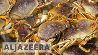 Download US crab fishermen fear future over climate change threat Video