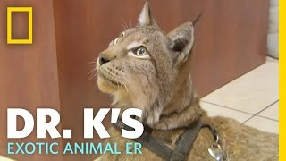 Download A Hairy Situation | Dr. K's Exotic Animal ER Video