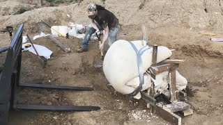 Download College Student Digs Up Dinosaur Skull Video