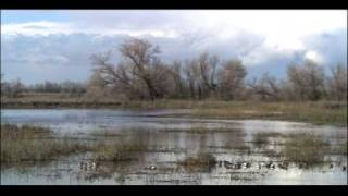 Download Aquatic Biomes Wetlands | Biology | Ecology Video