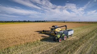 Download Claas Lexion 460 & New Holland CR9080 | Repka 2018 | East Slovakia Agriculture (ESA) 2018 Video