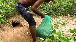Download How To Catch A Porcupine - Survival Technology: Awesome Quick Porcupine Trap Using Nets Video