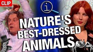 Download QI | Nature's Best-Dressed Animals Video