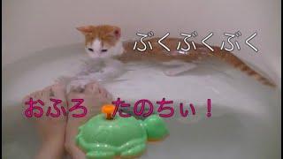 Download 【猫記録183】お風呂大好き子猫 滑ってドボンついでに水泳教室-Swimming of the kitten Video