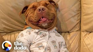 Download Proof That Pit Bulls Are Big Babies | The Dodo Video