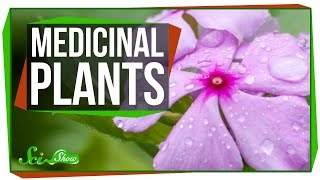 Download 4 Plants That Are Great for Humans Video