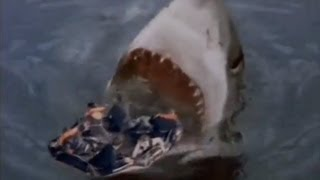 Download Shark Attack 3: Megalodon Video