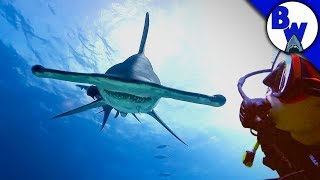 Download The SHARKS are HERE! Video