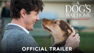 Download A DOG'S WAY HOME - Official Trailer (HD) Video