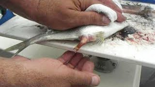 Download Wonderful Man Help Dead Fish Giving Birth To 50 Babies On The Boat Video