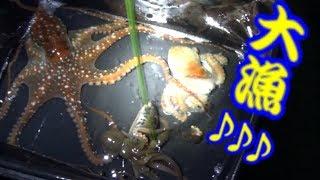 Download ヒラスズキを狙う磯で夜ガサガサをしてみた結果がヤバい!! Ocean creatures Video