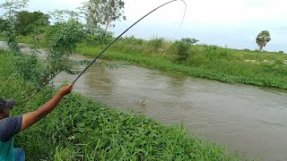 Download Fish hunting ||awesome traditional fishing Video