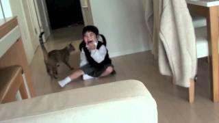 Download 子供とめちゃくちゃ楽しそうに遊ぶ猫(朝) Video