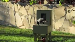 "Download Crow uses a vending machine #3 ""Crow box"" ""Crow kit″ Video"