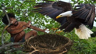 Download A forest man found a eagle nest on the higher tree - steal eagle eggs and cooked in mountain hole Video