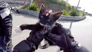 Download BIKERS HELPING ANIMALS & OTHERS IN NEED   RANDOM ACT OF KINDNESS   [Ep. #21] Video