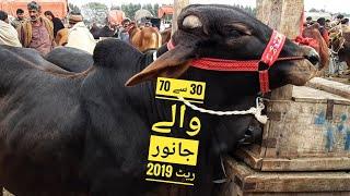 LATEST RATES Cow Mandi 2019 aur Bakra Eid 2019 per Kiya Hun