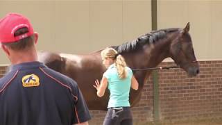 Download The TRT method Series Episode #4 - The vertical mare (part 3) Video