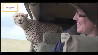 Download Stupid Humans vs Smart Wild Animals Video