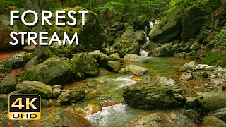 Download 4K Forest Stream - Relaxing River Sounds - No Birds - Ultra HD Nature Video - Relax/ Sleep/ Study Video